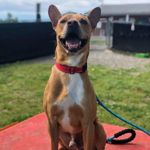 ARTIE, an adoptable Mixed Breed in Cape Girardeau, MO