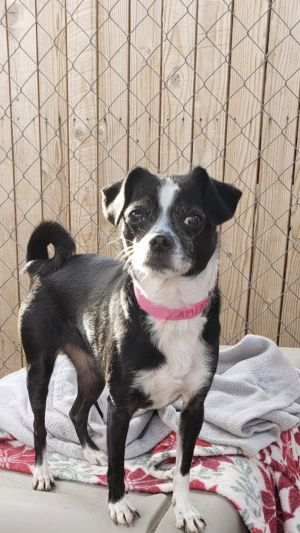 Panda - The Spunky Little Girl This cute sweet and sassy little girl is looking for her new forever