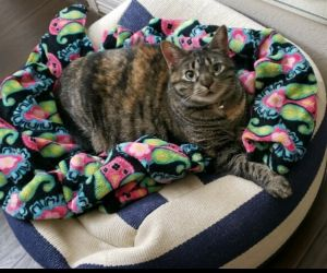 Hi Im Prudence Prue for short Im a 4 year-old cat who is independent and loving I grew up aro