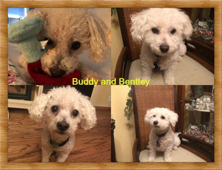 Adopted!! Buddy and Bentley - NV 1