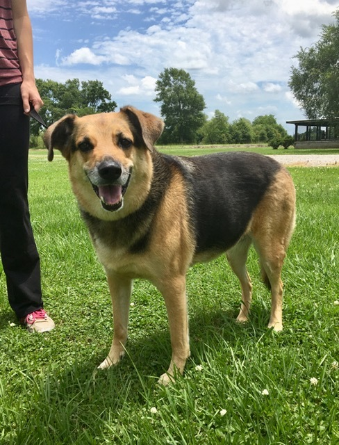 Abby, an adoptable German Shepherd Dog Mix in Carencro, LA