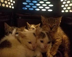 SHY NYC Breakfast Kitties