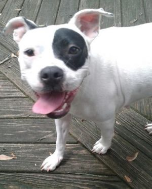All about DaisyDaisy would be a great pet for an active family who like to do things with her and