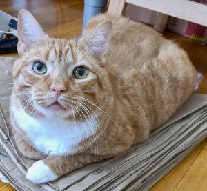 . Garfield .
