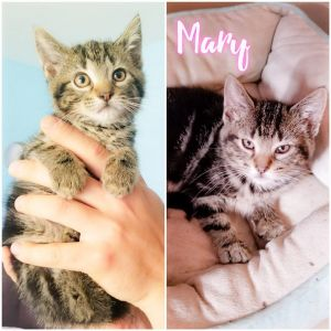 Meet Mary a super cute 9 week old female ready now for foster to adopt She wou