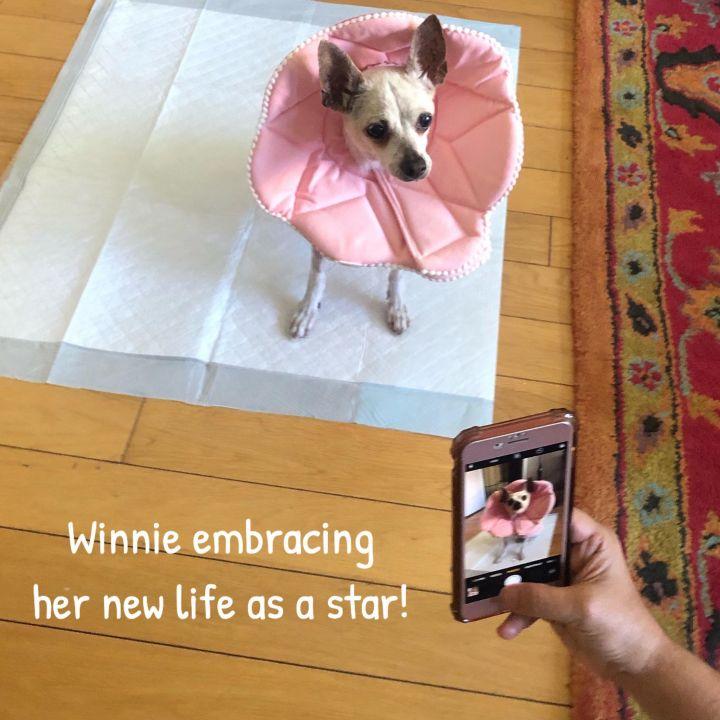 Winnie 4