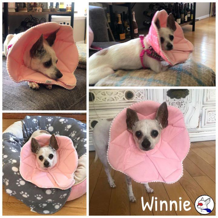 Winnie 6