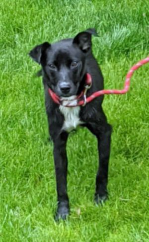 Serena is a super-sweet little pip of a pup She is six months old and only 28 lbs She is