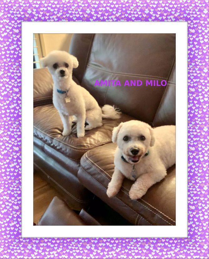 Adopted!! Milo and Amita - SW FL