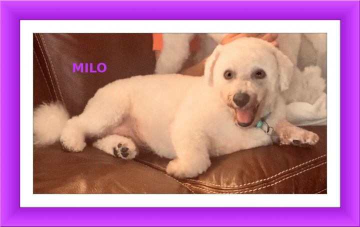 Adopted!! Milo and Amita - SW FL 2