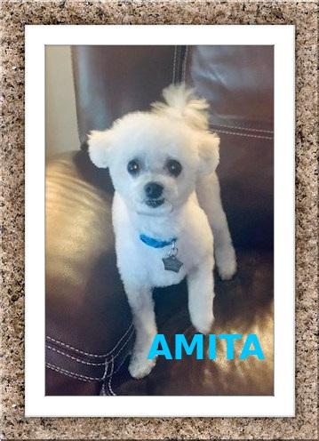Adopted!! Milo and Amita - SW FL 3