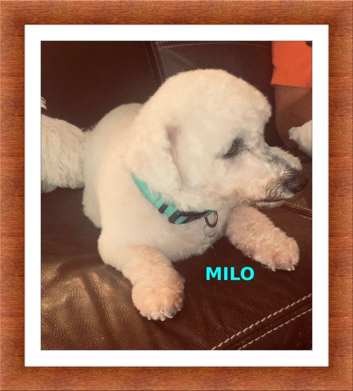 Adopted!! Milo and Amita - SW FL 4