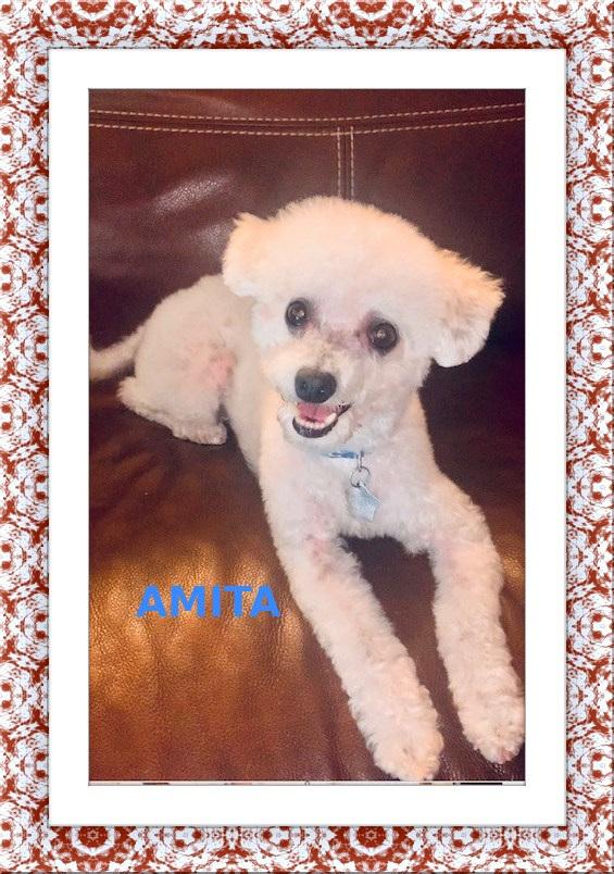 Adopted!! Milo and Amita - SW FL 5