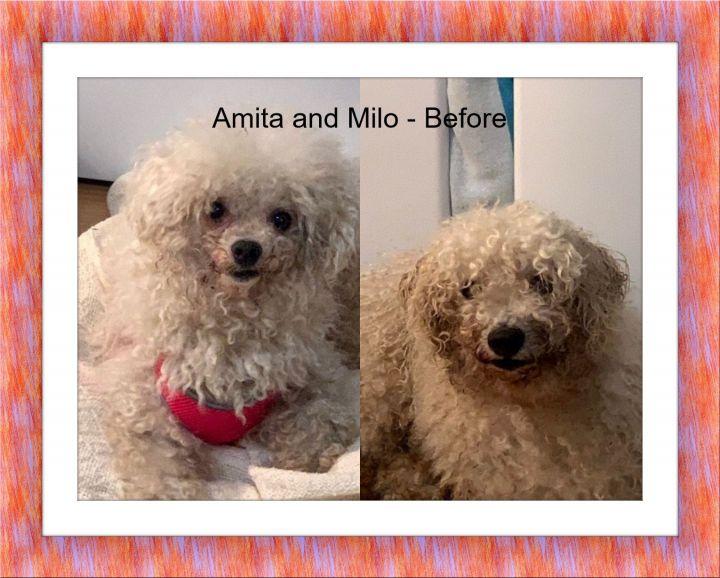 Adopted!! Milo and Amita - SW FL 6