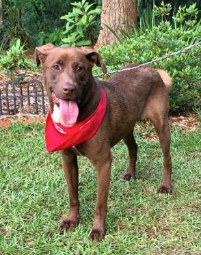 Morgan was dumped in a high kill shelter in Georgia It takes just one look at the video and we