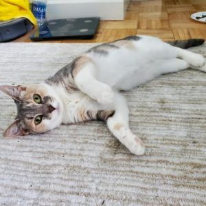 Meet Electra-shes 2-years-old and ready to be adopted Electra is a shy little