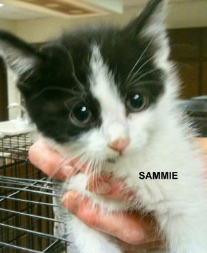 Sammie was found in a plastic container with milk thrown at it He was soaking w