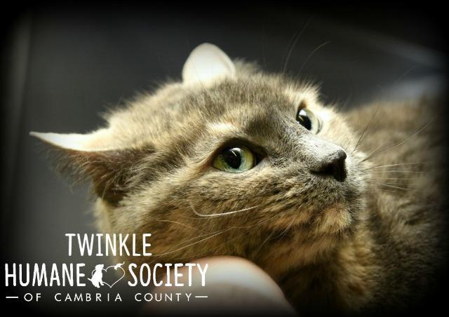 Twinkle 1