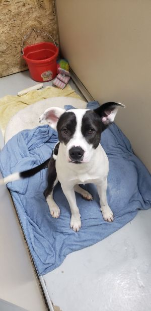 This is Jim He is a 2-3 yr old male Boxer mix He is super sweet and loves peop