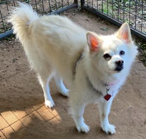 Dori is a sweet senior who was turned in with her friend Rooney when her long term owner fell on