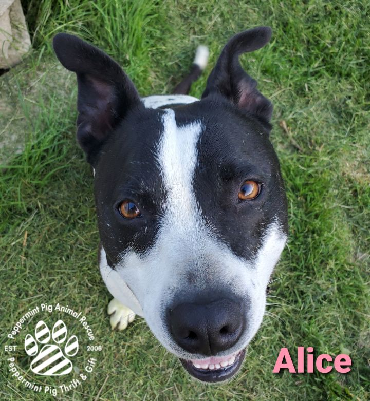 Alice COURTESY POST 2