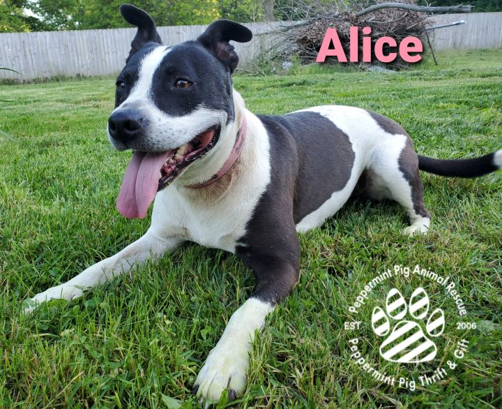 Alice COURTESY POST 3