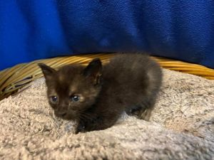 Hi friends My name is Moon 41255 I was brought in with a litter of kittens when we were found
