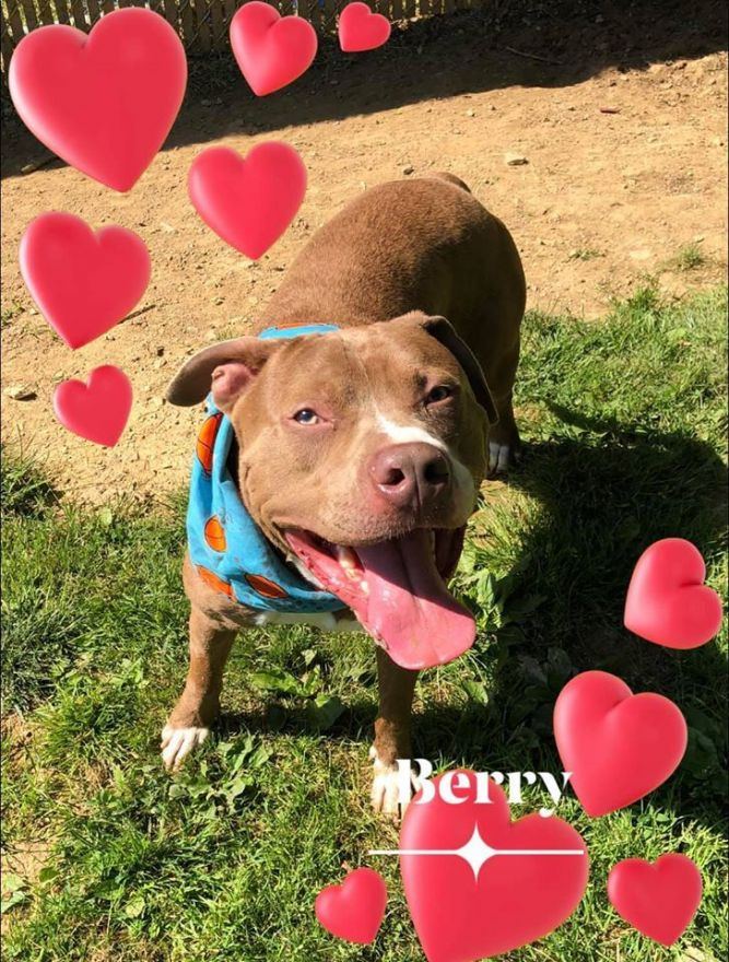 Berry - update! Adopted!