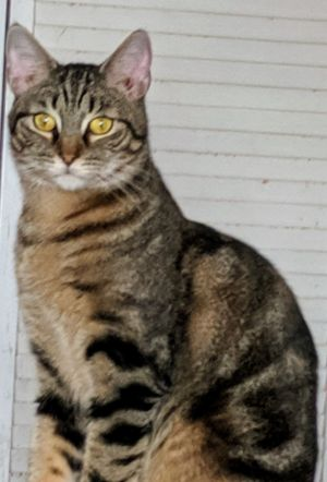 Meet Rico He is a very happy playful and affectionate 2 year old cat who is lo