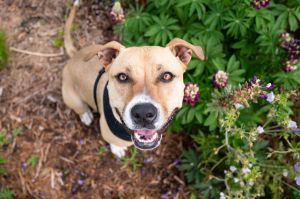 Melley - Overlooked Adoptable/Reduced Adoption Fee