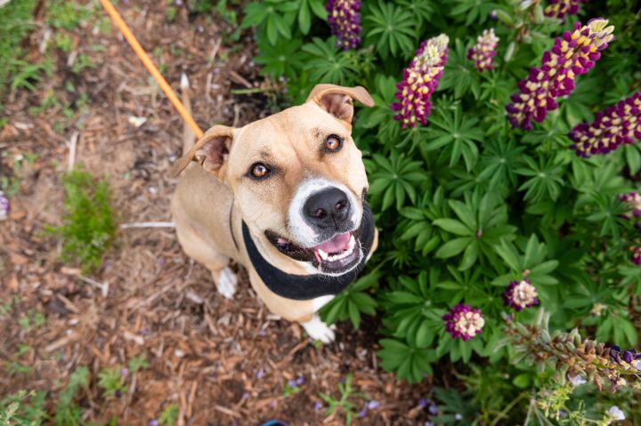 Melley - Overlooked Adoptable/Reduced Adoption Fee 4
