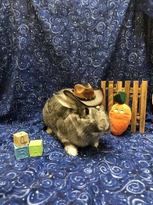 Marbles is a sweet bunny boy who was just relinquished to Rabbit Rescue from a nice indoor home with