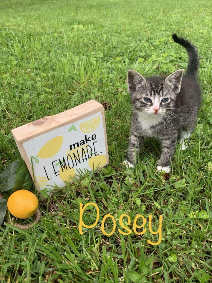 Posey 1