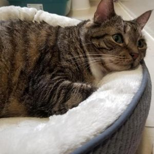 Meet Martina-shes 10-years-old and looking for a home Martina prefers to spend her days lounging a