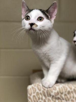 Spike - kitten!