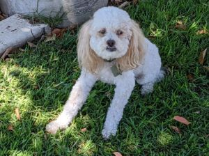 This amazing 5yr old happy go-lucky kid is seeking a new central coast family
