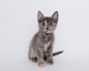 Dr Grey is all over the place Sweet plus cuddly plus extra playful She is very outgoing and bel