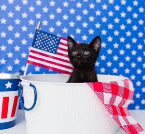 Dr. Derek Shepherd Domestic Short Hair Cat