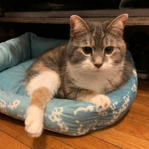 Meet Hail-shes 2-years-old and looking for a loving quiet home Hail is a very sweet cat who loves