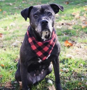 SENIOR ALERT This beautiful senior girl is looking for a home Raisin was part