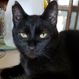 Alhana was born on March 31 2012 She was rescued from a high-kill shelter and