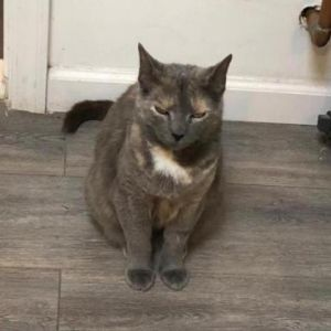 Hi Im Rose Im 3-years-old and looking for a home Im quite shy in new environments but once you