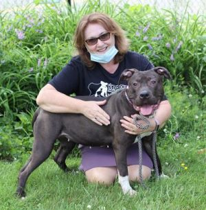 Hi Im Stella a beautiful 2 year old pit bull Im a city girl who lived in an apartment with
