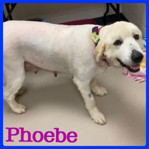 Phoebe and Finlay are a pair of Great Pyrenees they are about 5-7 years old and about 110 each They