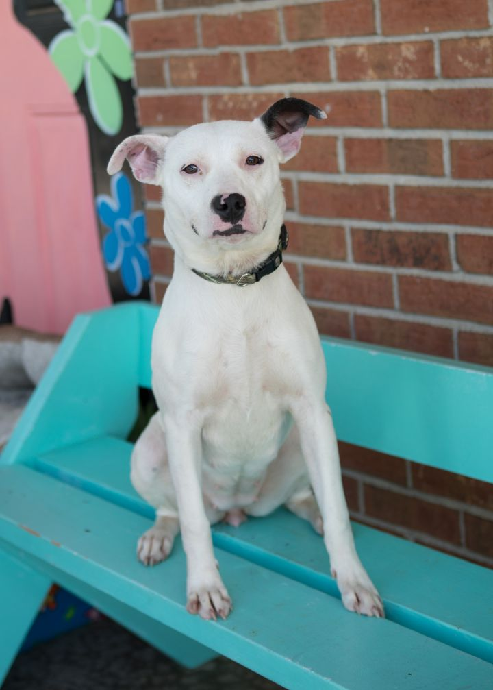 MARTHA, an adopted Mixed Breed in Cape Girardeau, MO