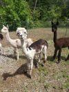 Sadie, Coco & Gigi
