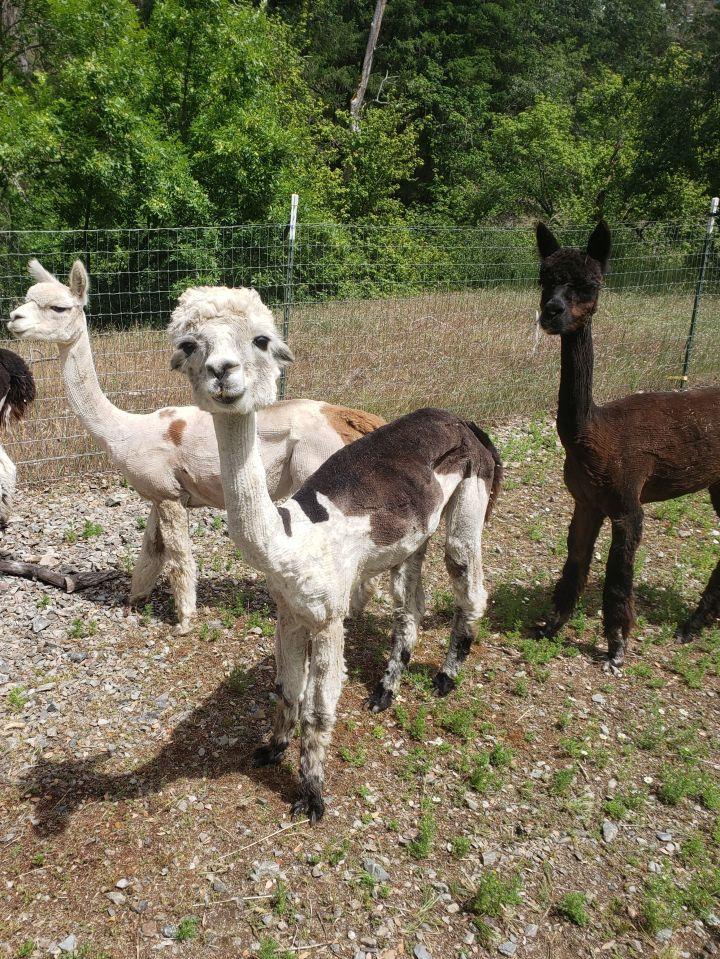 Sadie, Coco & Gigi 1