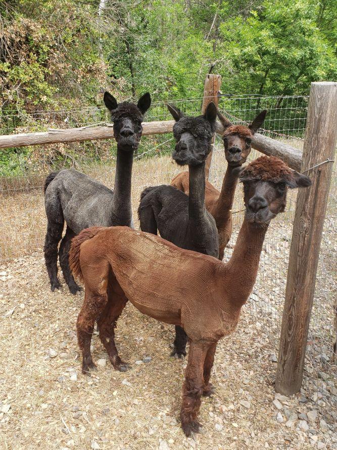 Karmin, Whitney, Melissa & Mindy