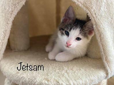 Jetsam 2