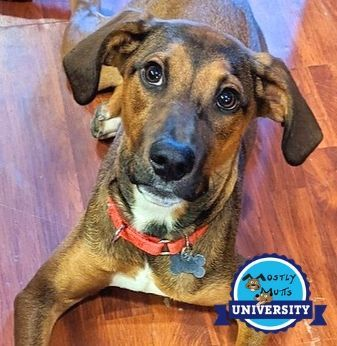 Caterpillar, an adopted Hound Mix in Kennesaw, GA
